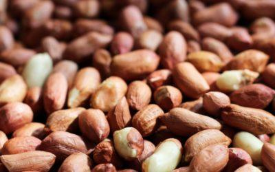 Sind Erdnüsse wirklich Nüsse?