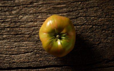 Sind grüne Tomaten giftig oder essbar?